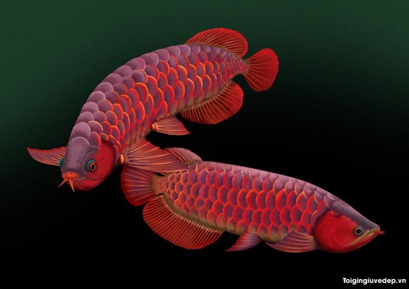 Hình ảnh Cá Rồng đẹp, quý hiếm và ấn tượng nhất