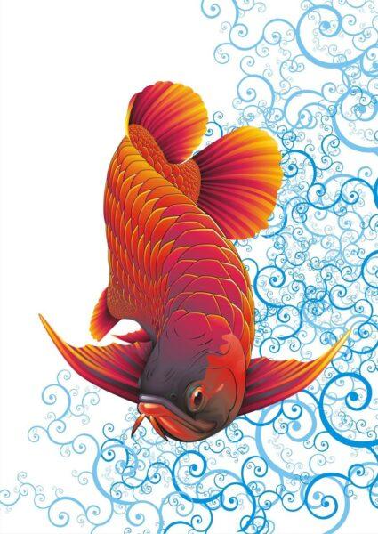 hình ảnh cá Rồng đỏ đẹp