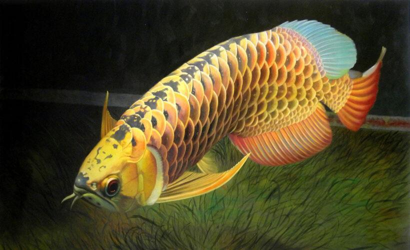 hình ảnh Cá Rồng lớn