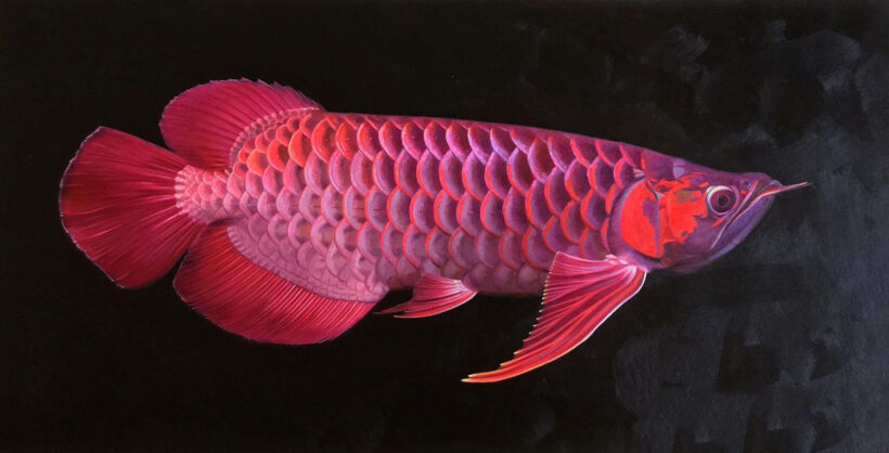 hình ảnh Cá Rồng lung linh