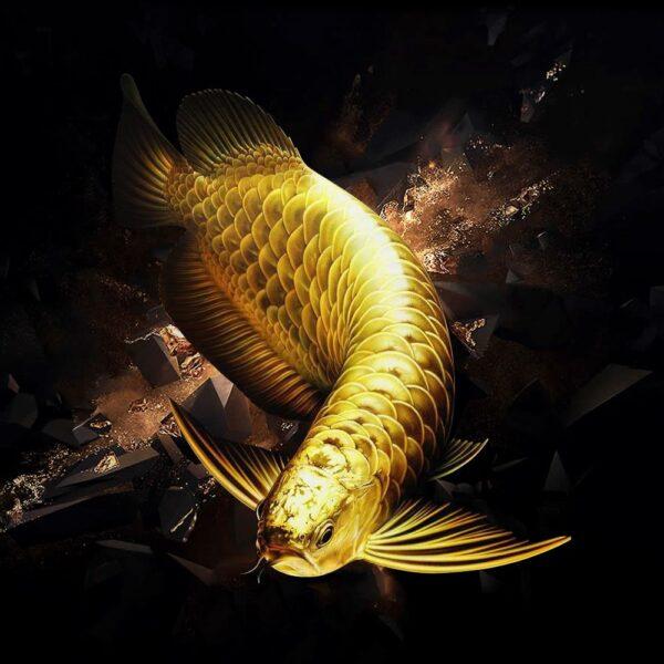hình ảnh cá Rồng sinh động nhất