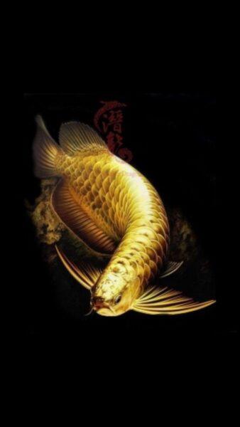 hình ảnh cá Rồng vàng rực rỡ