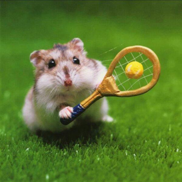 hình ảnh chuột hamster cute chơi thể thao