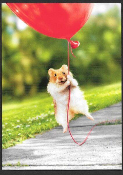 hình ảnh chuột Hamster dành cho iphone